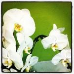 Taken by beckybeare using Lo-fi filter. Link - http://instagr.am/p/SCgcieKxW-/