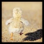Taken by kegrand using Hefe filter. Link - http://instagr.am/p/R2aRfHN52L/