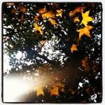 Taken by beatricewsy using Lo-fi filter. Link - http://instagr.am/p/RmbORFvTQ8/