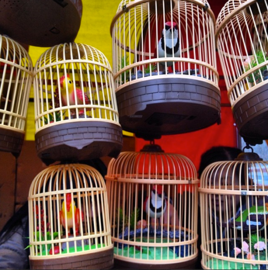 One of the most charming artifacts from the Lunar festival street vendors: artificial singing birds.